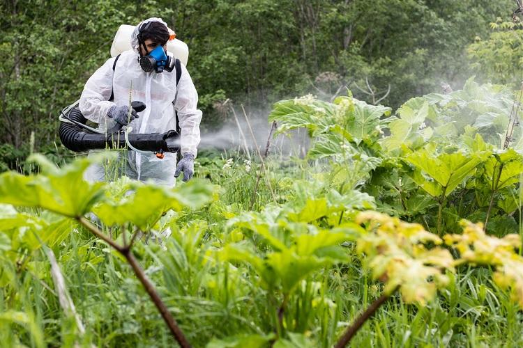 Применение гербицидов