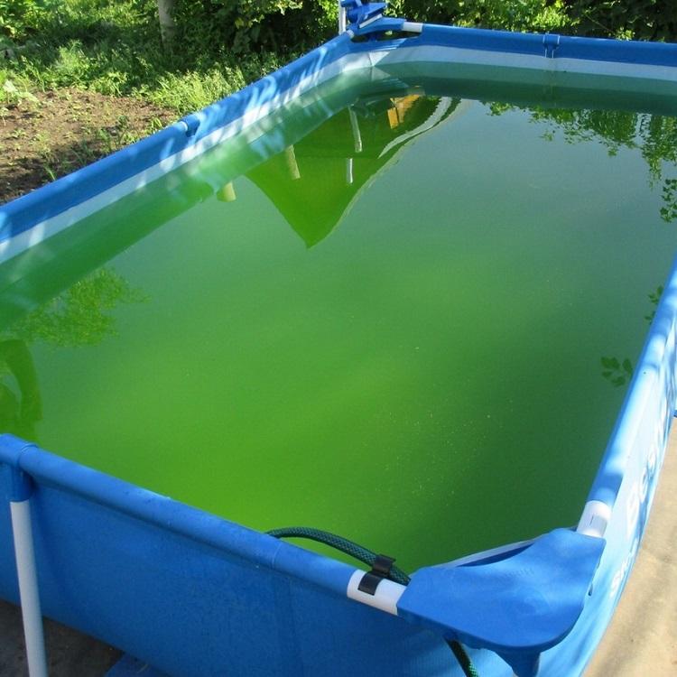 Загрязненный бассейн