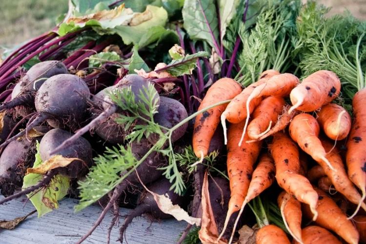 Выкопанные свекла с морковью